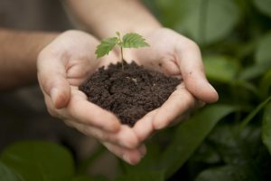 Mais de 8 milhões de mudas plantadas